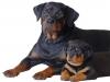 lifetime coaching dogs