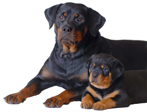 Adelaide dog training with lifetime coaching for dogs