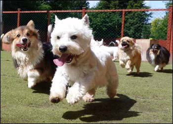 Dog socialisation and networking